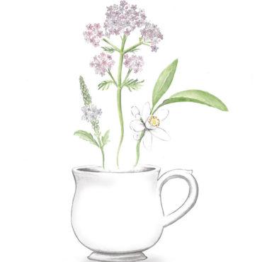 Verbena-valeriana-llimona