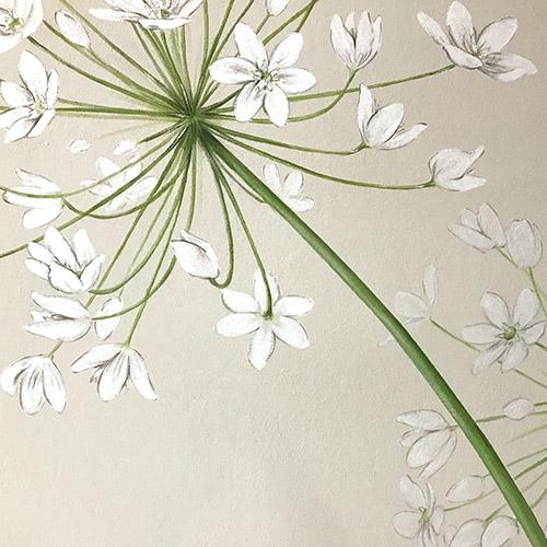 Allium detalle